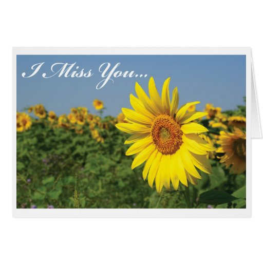 I Miss You Sunflower Greeting Cards