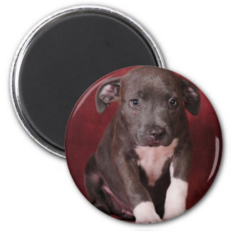 I need a loving home magnet