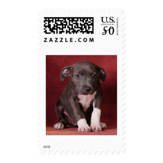 I need a loving home postage