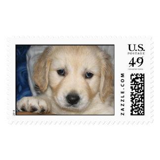 I need love postage