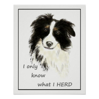 """I only know what I HERD"" ""Border Collie"" quote Poster"
