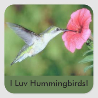 ¡I pegatina de los colibríes de LUV!