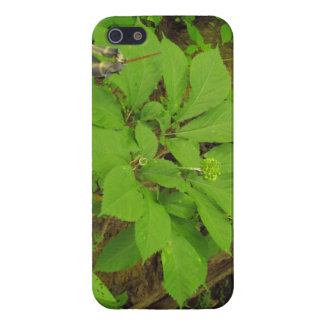 I phone case with Ginseng plant on it