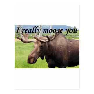 I really moose you: Alaskan moose Postcard