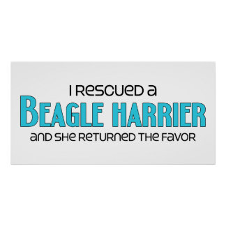 I Rescued a Beagle Harrier (Female Dog) Posters
