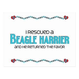 I Rescued a Beagle Harrier (Male Dog) Postcard