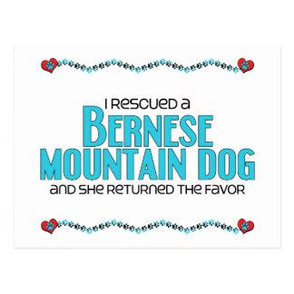 I Rescued a Bernese Mountain Dog (Female Dog) Postcard