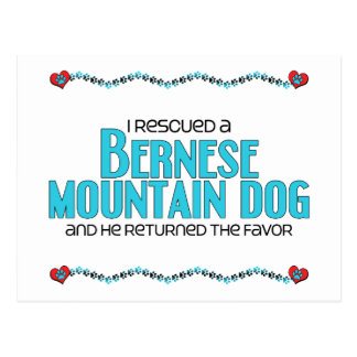 I Rescued a Bernese Mountain Dog (Male Dog) Postcard