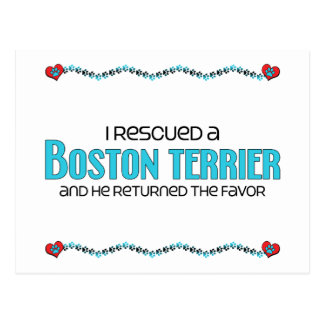 I Rescued a Boston Terrier (Male Dog) Postcard