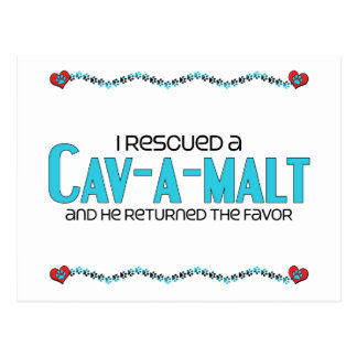 I Rescued a Cav-A-Malt Male Dog Adoption Design Post Cards