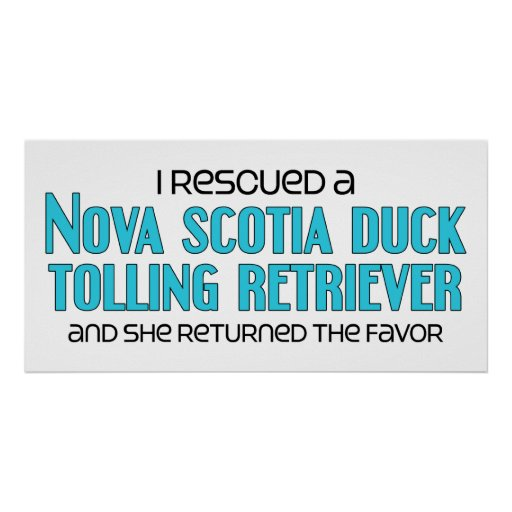 I Rescued a Duck Tolling Retriever (Female Dog) Posters