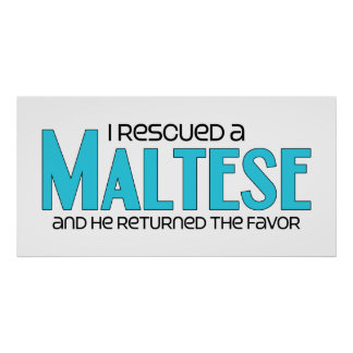 I Rescued a Maltese (Male Dog) Poster