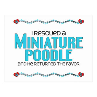 I Rescued a Miniature Poodle (Male Dog) Postcard