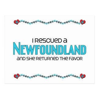 I Rescued a Newfoundland (Female Dog) Postcard