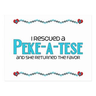 I Rescued a Peke-A-Tese (Female) Dog Adoption Postcard