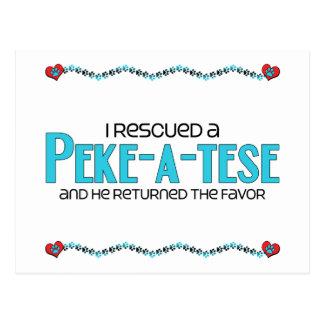 I Rescued a Peke-A-Tese (Male) Dog Adoption Design Postcard