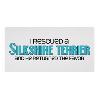 I Rescued a Silkshire Terrier (Male) Dog Adoption Poster