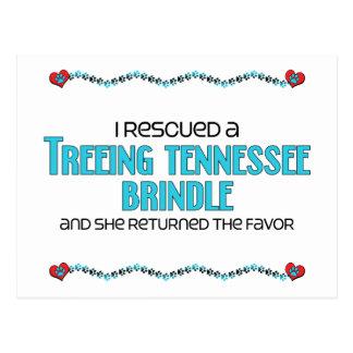 I Rescued a Treeing Tennessee Brindle (Female Dog) Postcard