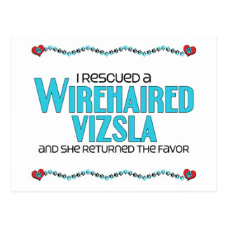 I Rescued a Wirehaired Vizsla (Female Dog) Postcard
