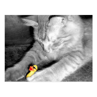 'I Said Don't Feed the Cat' Rubber Duck Postcard