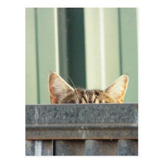 I SAW A KITTY CAT POSTCARD