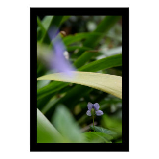 I saw you... Wild Violets - Floral Photography Poster