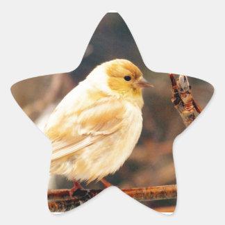 I See Spring Star Sticker