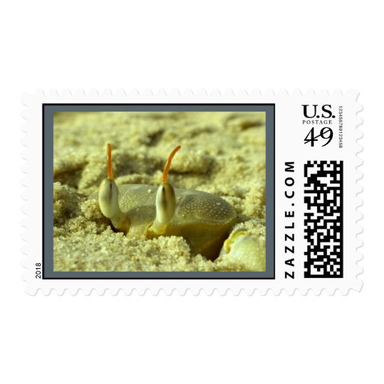 I see you - crab at the beach close up postage
