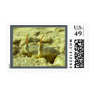 I see you - crab at the beach close up postage stamp