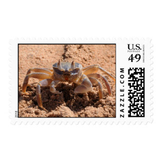 I see you - crab at the beach close up stamp