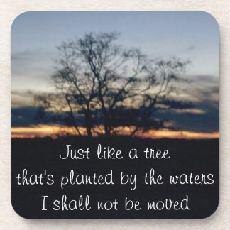 I Shall Not Be Moved Tree Photograph Beverage Coaster