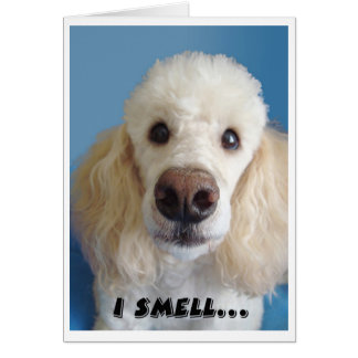 I Smell An Old Fart White Poodle With Big Nose Greeting Card