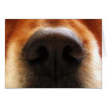 I Smell Cake, Dog Snout, Birthday Greeting Card