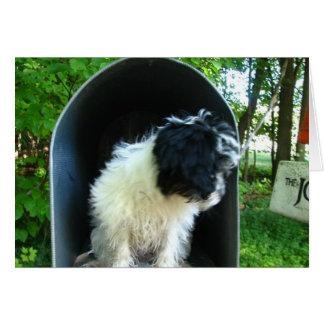 I Srta. You Puppy en buzón Tarjeta De Felicitación