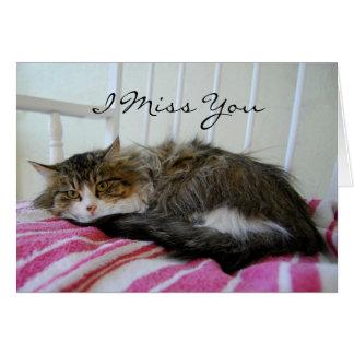 I Srta. You, tarjeta del gato de Coon de Maine