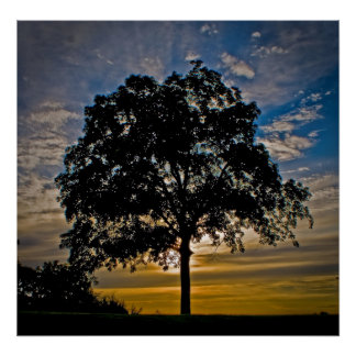 """""""I stand alone"""" - Photographic art on Canvas Print"""