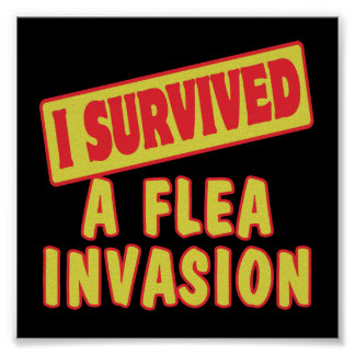 I SURVIVED A FLEA INVASION POSTERS