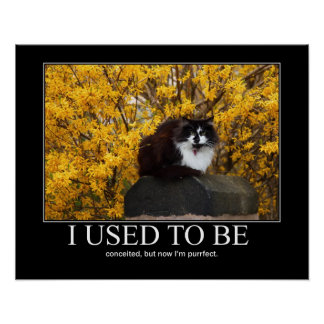 I Used to Be.. Cat Artwork Funny Poster