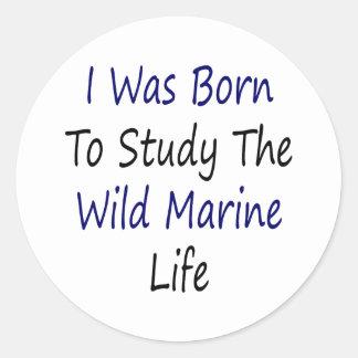 I Was Born To Study The Wild Marine Life Round Stickers