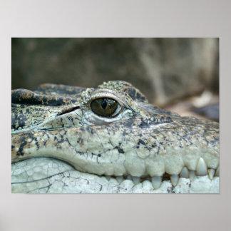 I watching you - Crocodile Poster