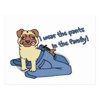 I Wear The Pants in The Family Pug Postcard
