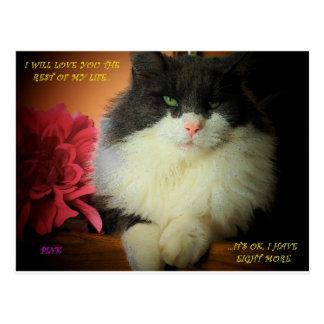 i WILL LOVE YOU..Cat Nine Lives Postcard