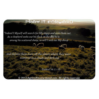 I will search for My sheep Bible Quote Magnet