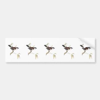 Iago Sparrow Bumper Sticker