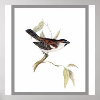 Iago Sparrow Poster