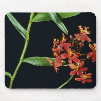 Ibaguense Epidendrum flowers Mouse Pads