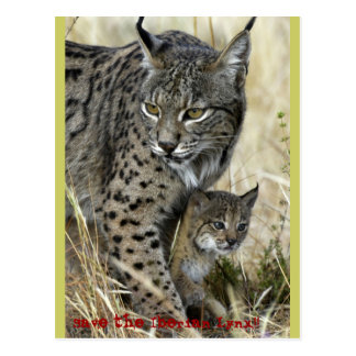 Iberian lynx - Iberian Lynx Postcard