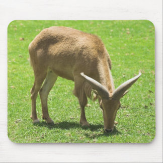 Ibex Mouse Pad
