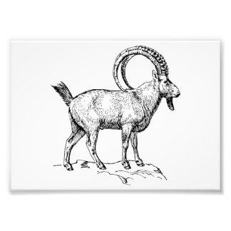 Ibex Photo Art