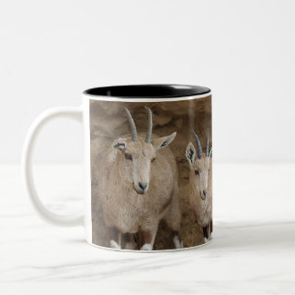 Ibex Two-Tone Coffee Mug